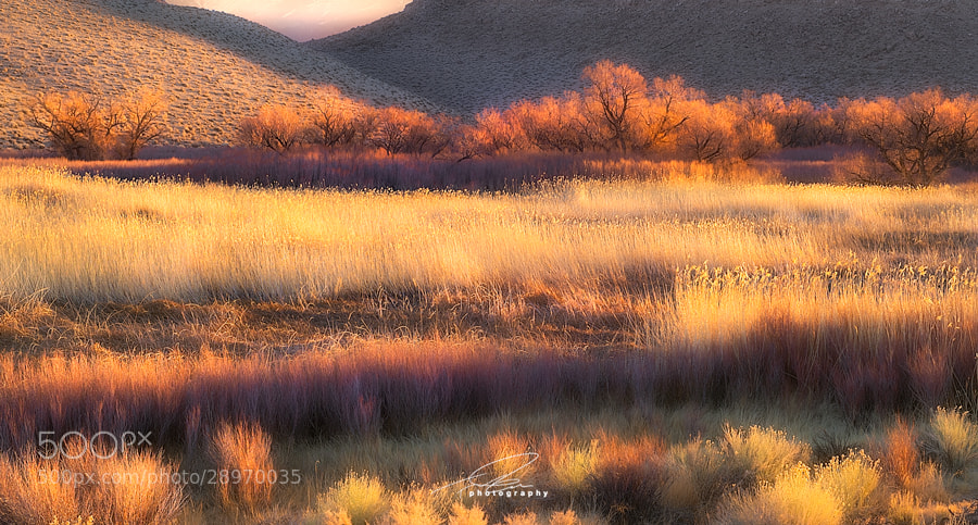 Photograph As We Lie In Fields Of Gold by Ted Gore on 500px