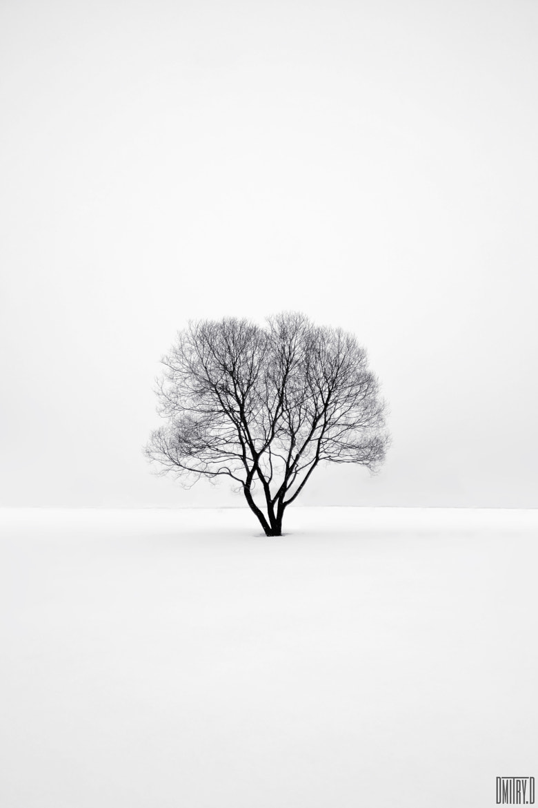 Photograph Lonely tree. by Dmitry Doronin on 500px