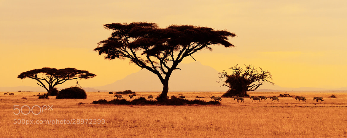 Photograph Color of Africa by Frederic Paolino on 500px