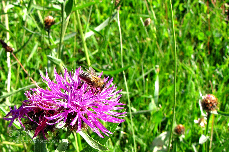 Photograph Bee by Rausch Wilhelm Robert on 500px