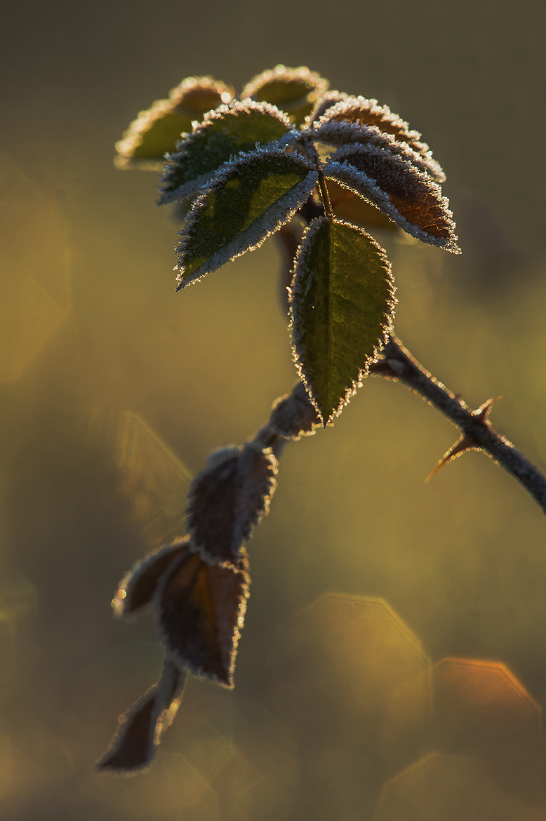 Photograph bitten by the frost by Andy 58 on 500px