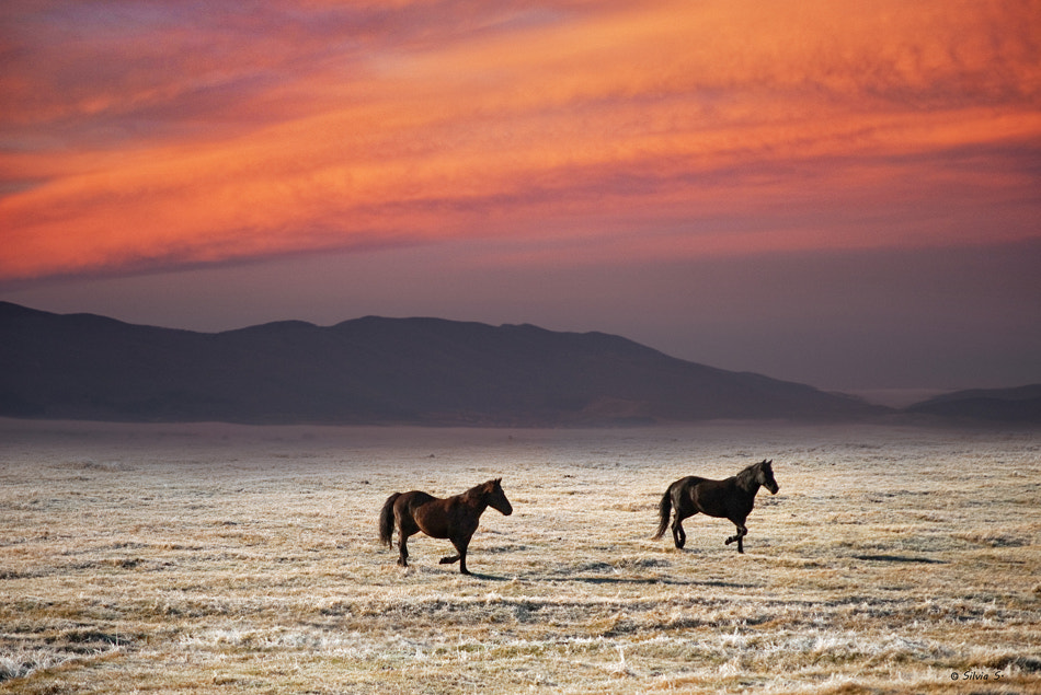 Photograph Dancing horses by Silvia S. on 500px
