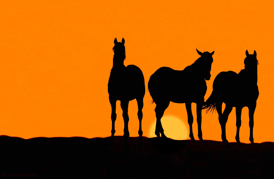 Horses by Patrice Thomas | 500px.com