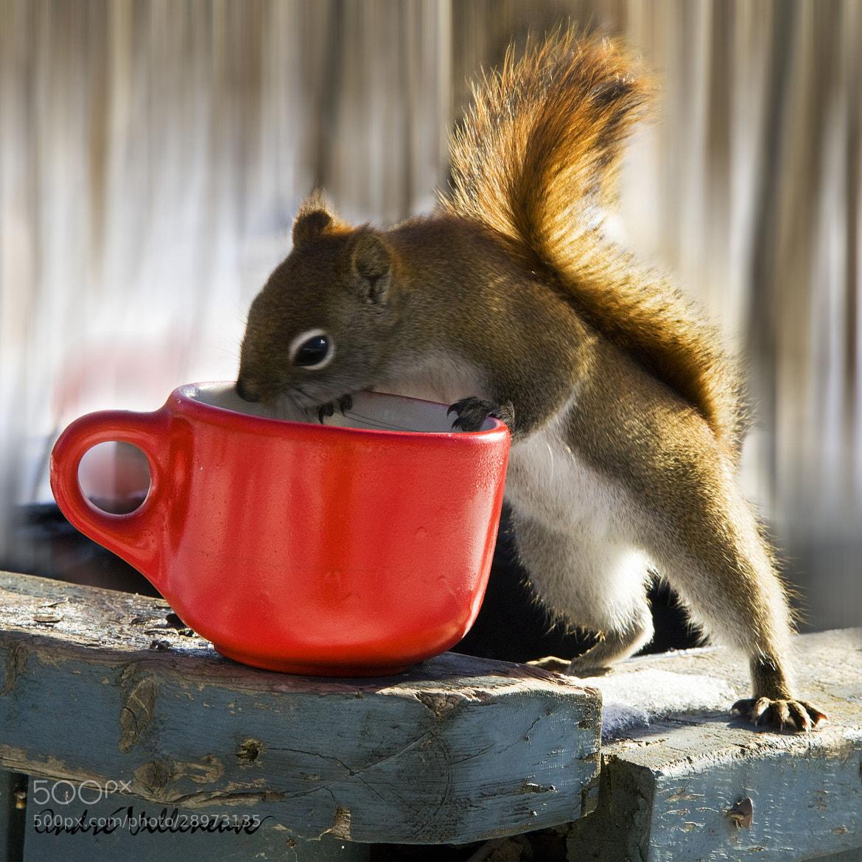 Photograph Un odeur de cafe by Andre Villeneuve on 500px