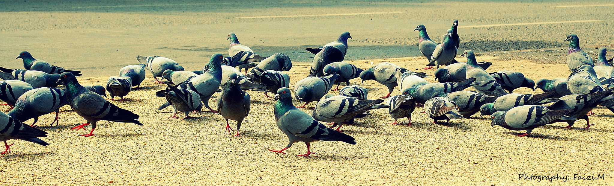 Photograph Pigeons by Faizan Mubasher on 500px