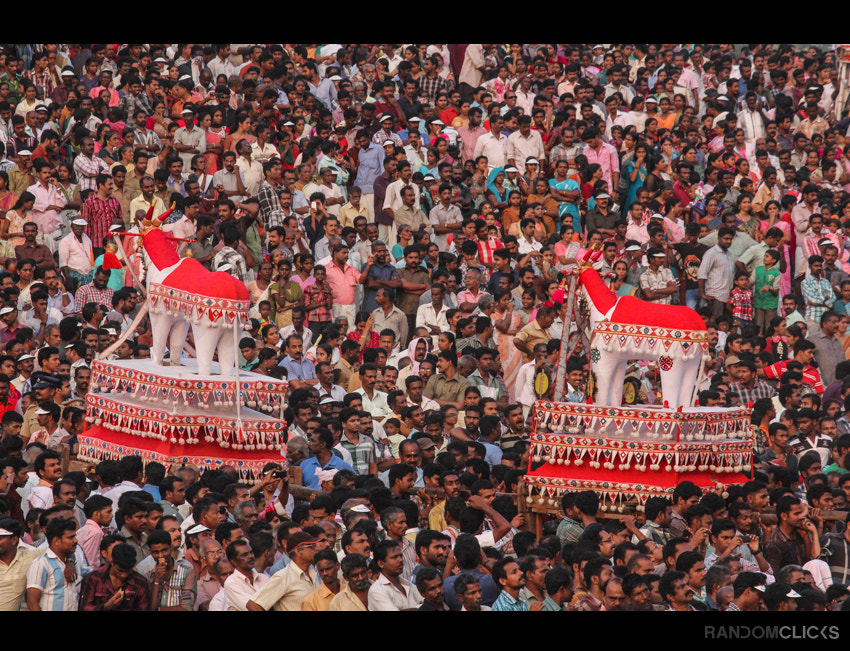 Photograph Bulls and the crowd... by Syam (randomclicks.in)  on 500px