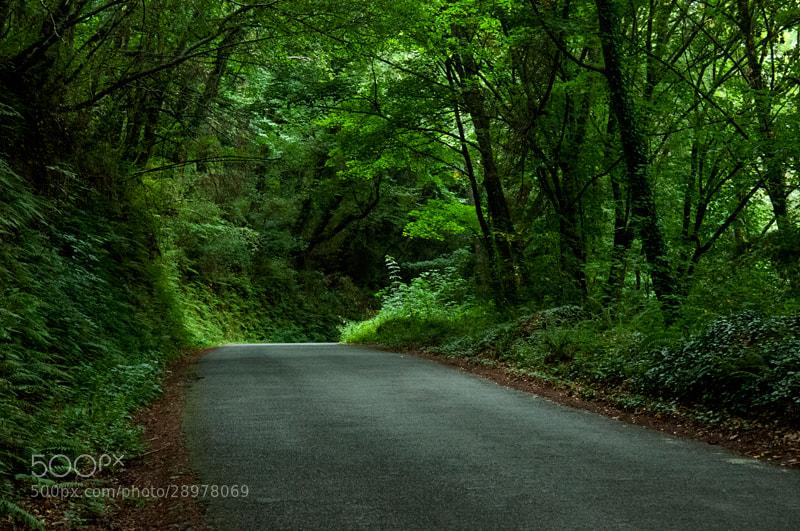 Camino de Santiago 2012  Triacastela - Samos V  _______________________________