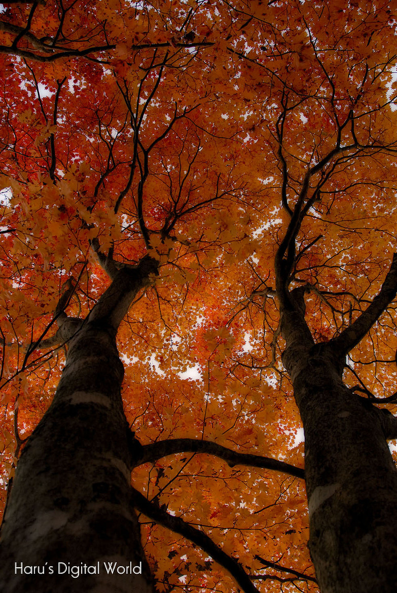 Photograph Red autumn by Haru Digital phot on 500px