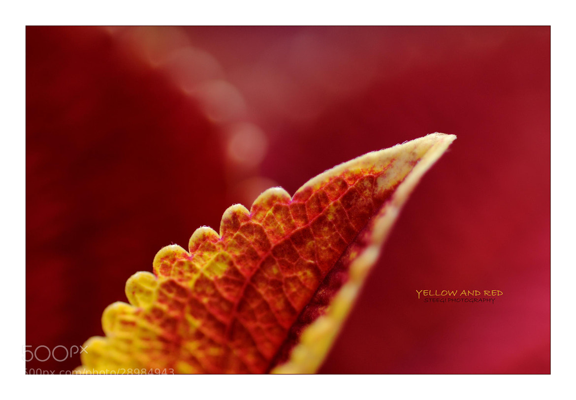 Photograph Yellow and Red by Andreas Steegmann on 500px
