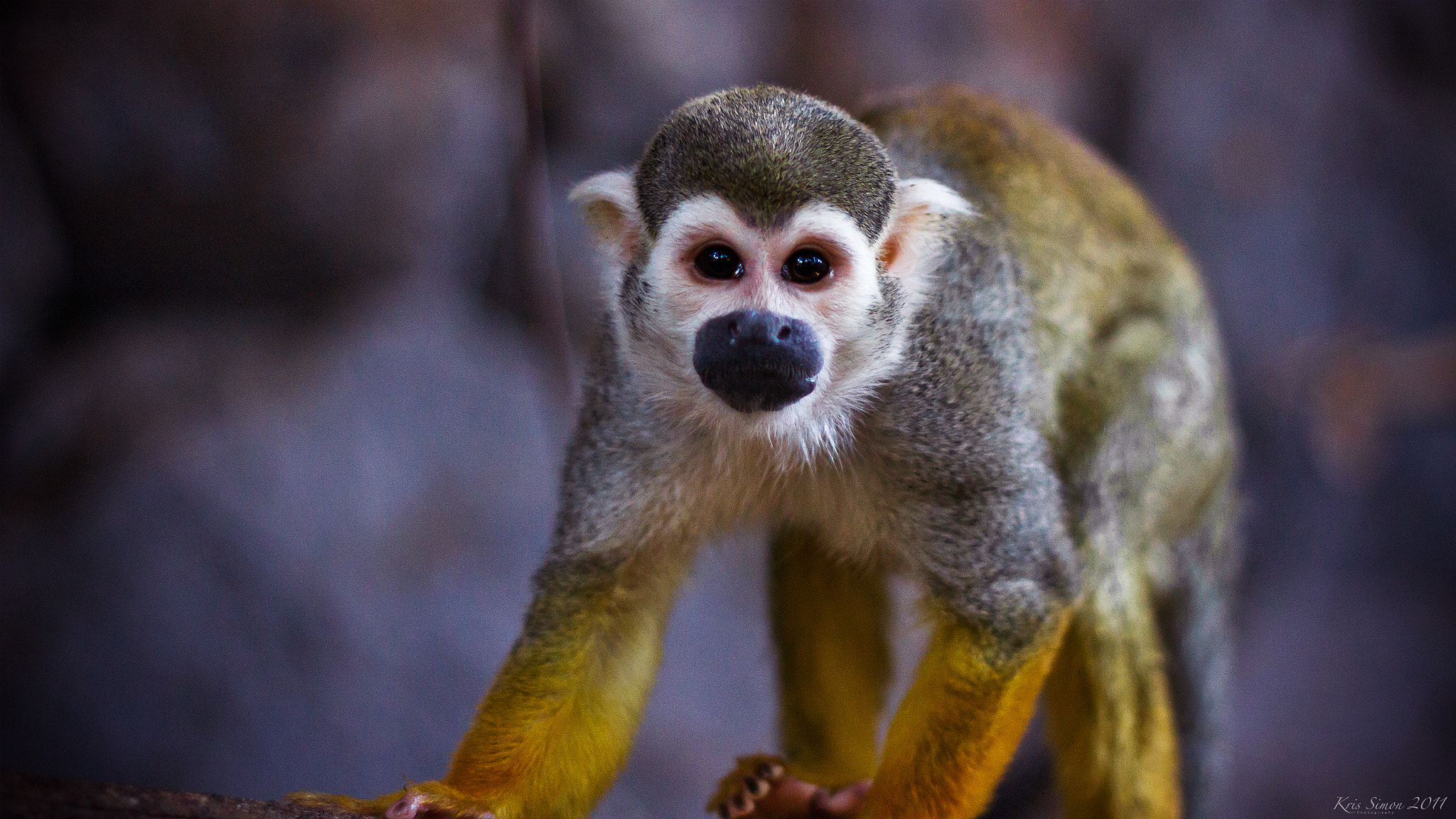 Photograph Monkey business by Kris Simon on 500px