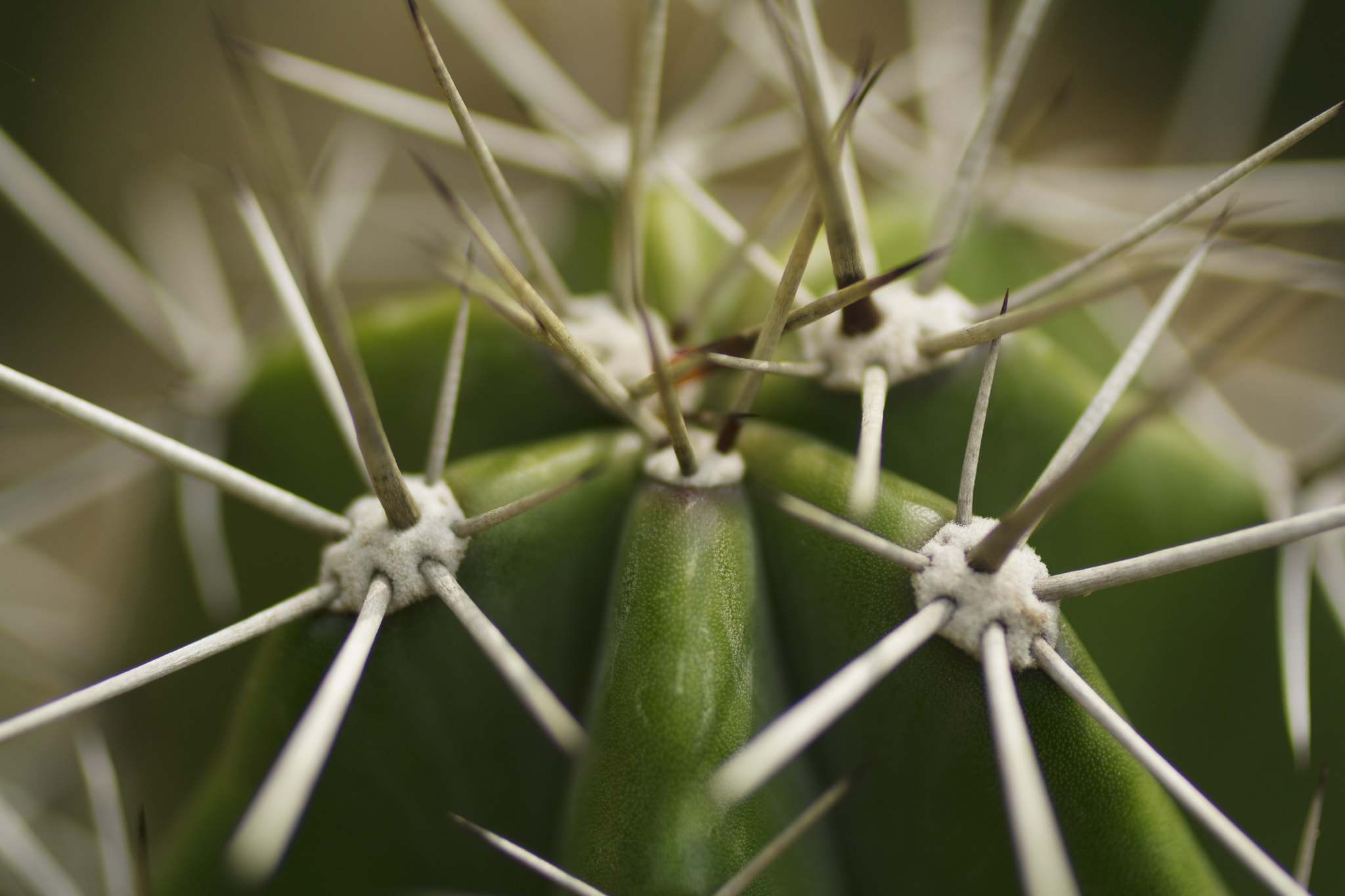 "Photograph Da série ""cactus"" - 4 by Oswaldo Henrique on 500px"
