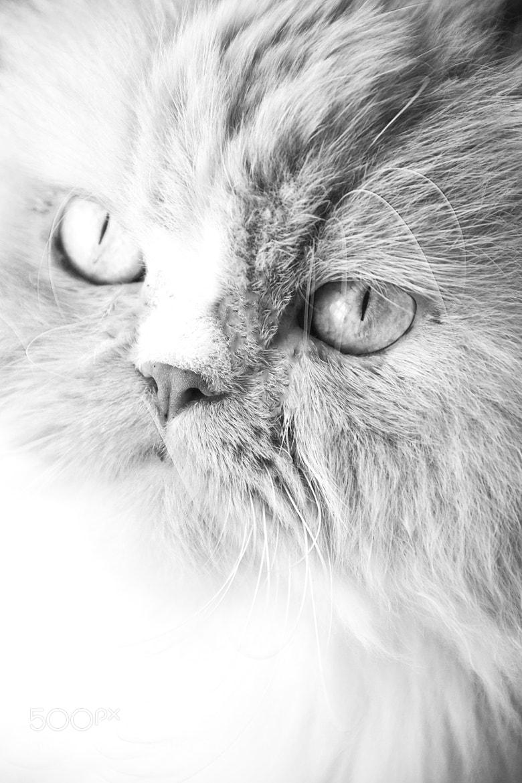 Photograph model:) by Nazar Bashutskyy on 500px