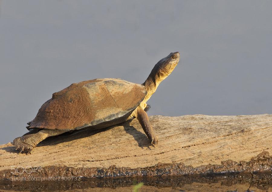 Taken on Rhino Island, Matusadona National Park, 21st September 2011