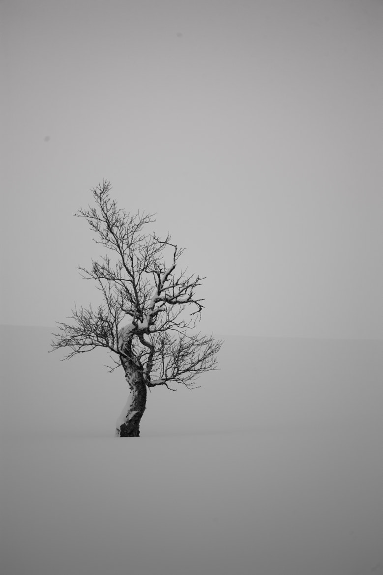 Photograph Alone in the cold... by Per Jørgen Sørbø on 500px