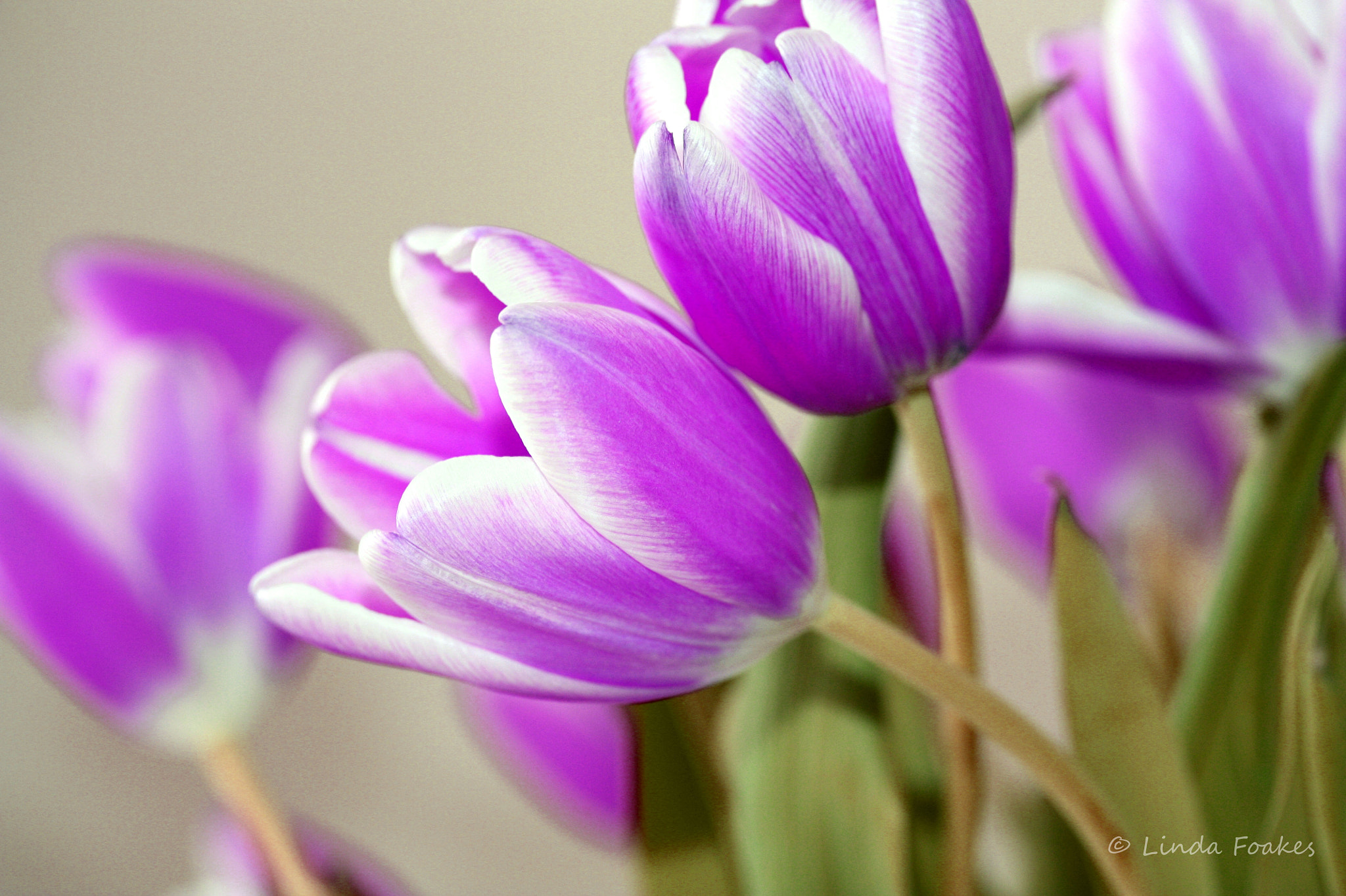 Photograph Purple Time by Linda Foakes on 500px