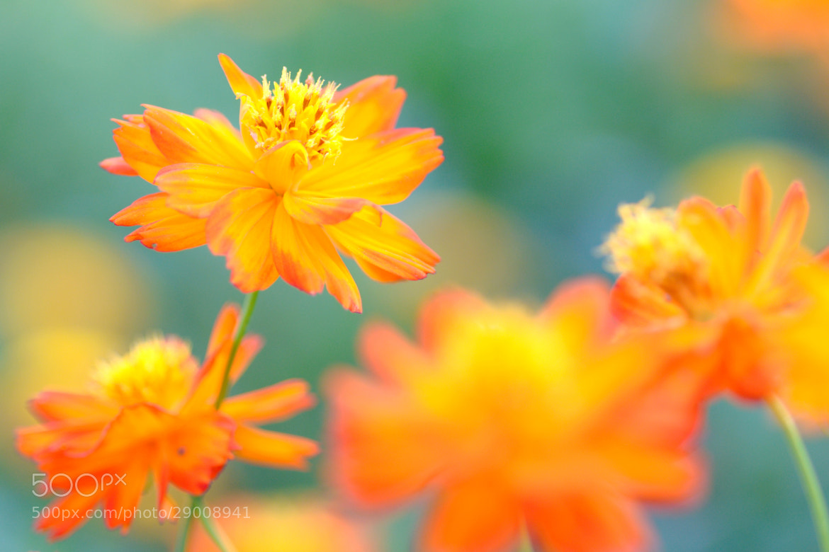Photograph Orange Color by Anake Seenadee on 500px