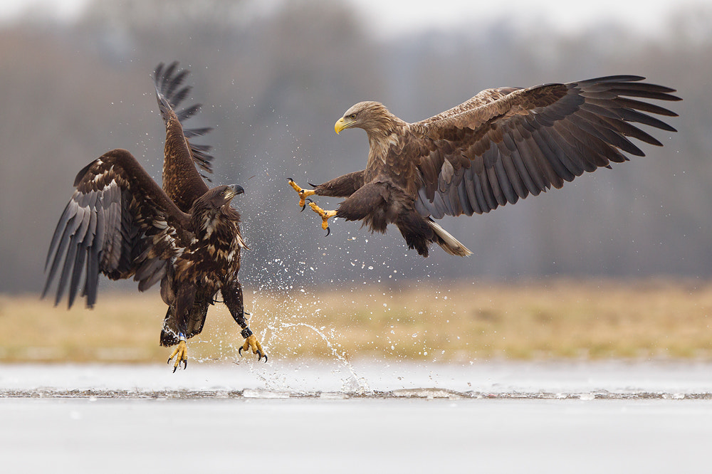 Photograph Did I scare you?? by René Visser on 500px