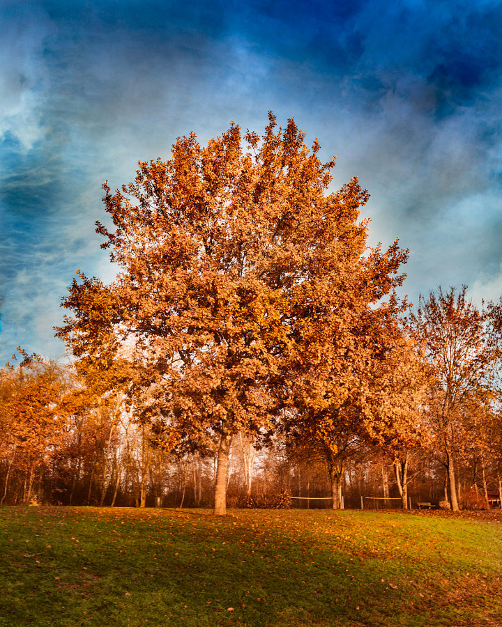 Autumn colors against winter cold by Meriuţă Cornel | 500px.com