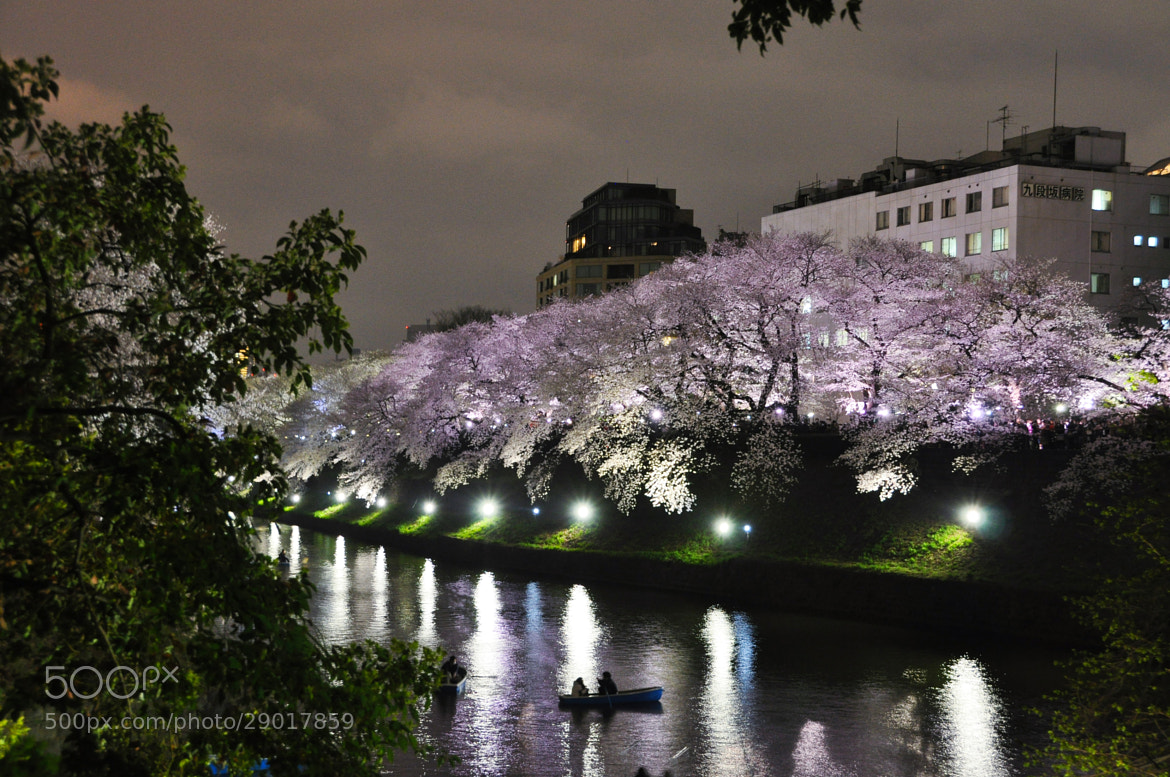 Photograph Cherry Blossoms Night view by Takashi Ayusawa on 500px