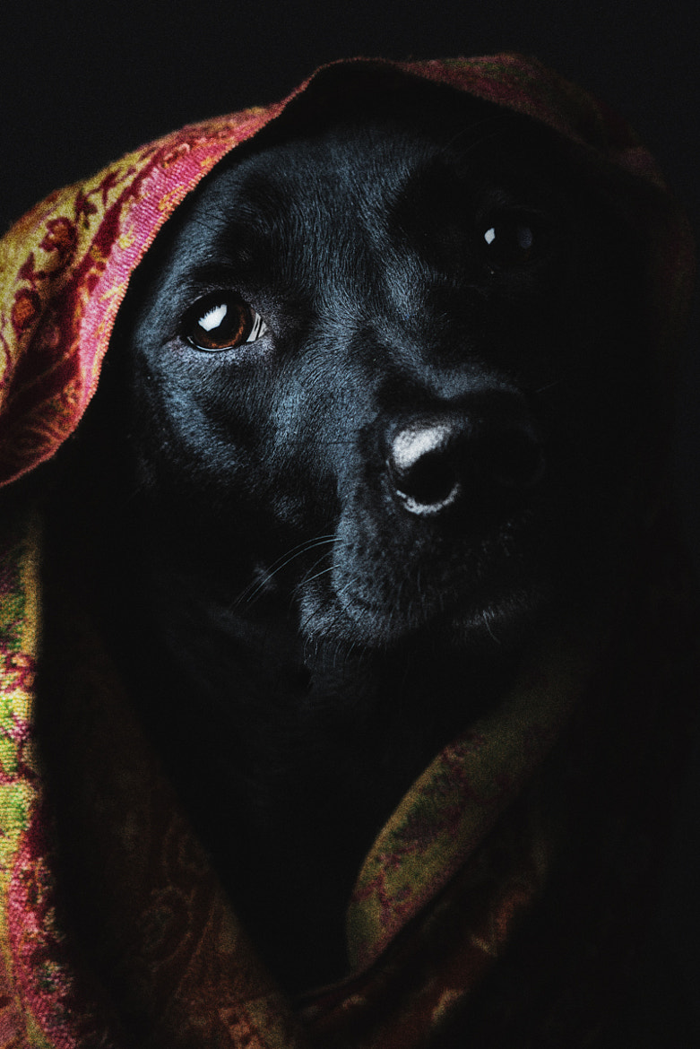 Photograph Olive by Alexandria Huff on 500px