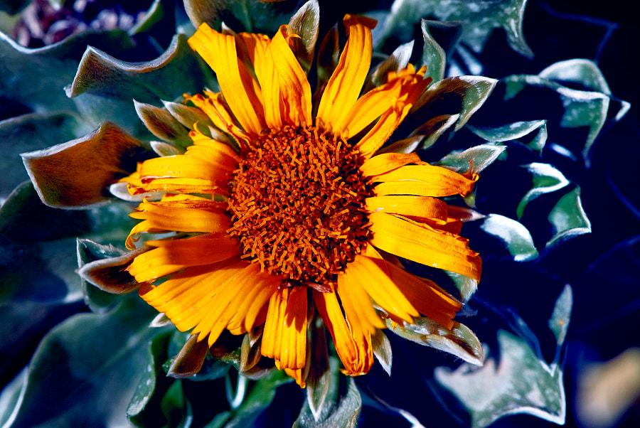 Flora del Jandín Canario L.P. de Gran Canaria by Marco Aº Garcia on 500px.com