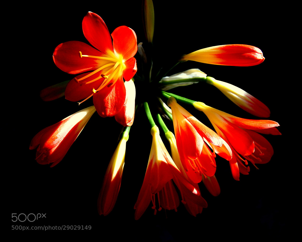 Photograph Colours in the dark by Ruud Eelderink on 500px