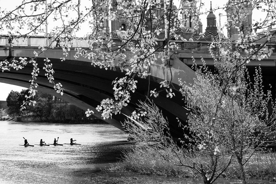 Four rowers by Ana V. on 500px.com