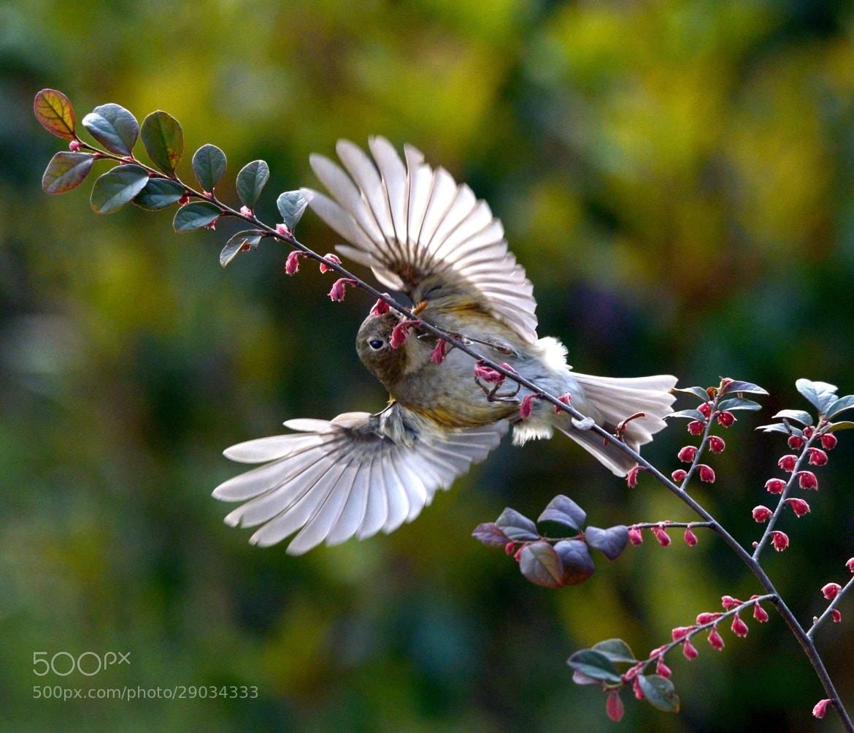 Photograph Birds 24 by YiWei Zheng on 500px