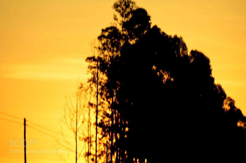 Photograph Sunset by Paulo Zerbato on 500px