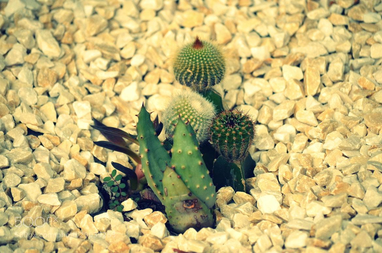 Photograph Cactus by Paulo Zerbato on 500px