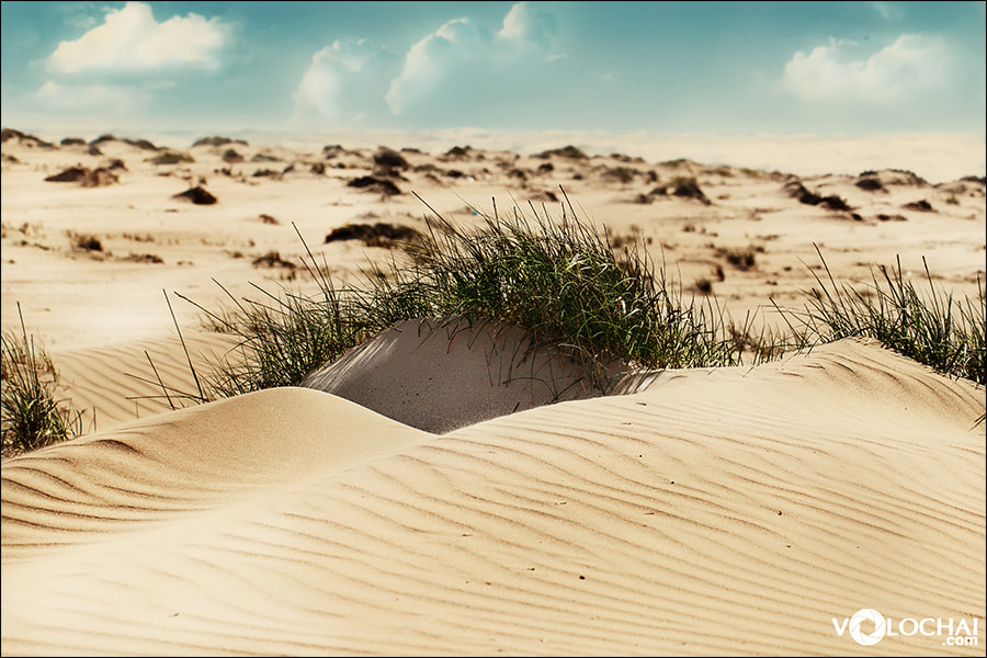 Photograph long road to the dunes by J V on 500px