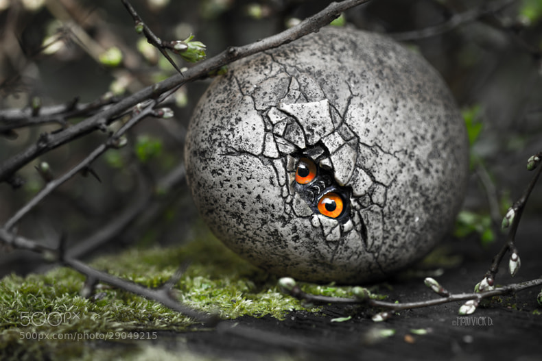 Photograph Ovum Draconis by Marivick D on 500px