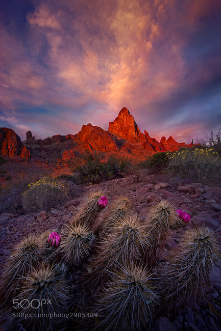 Photograph Desert Garden by Marc  Adamus on 500px