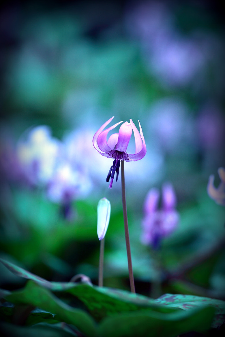 Photograph Fairies of the Forest by yume . on 500px
