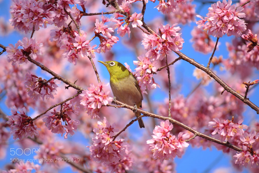 Photograph Spring Moments by AKITO  on 500px