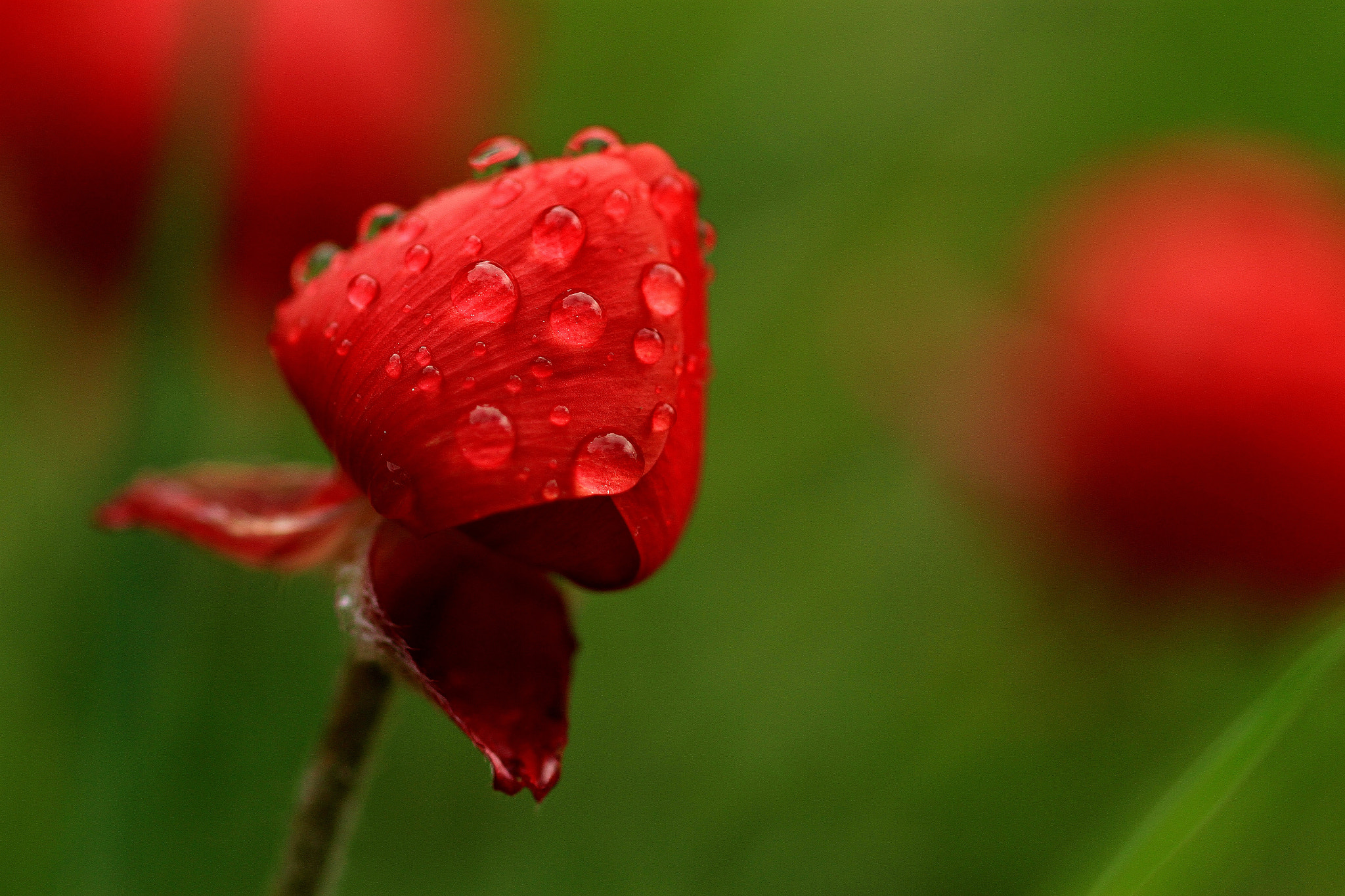 Photograph Red Tears by Mohammad Asfour on 500px