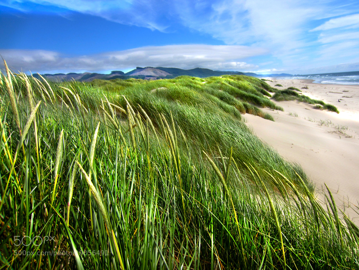 Photograph windy day at the Beach by William Edmonds on 500px