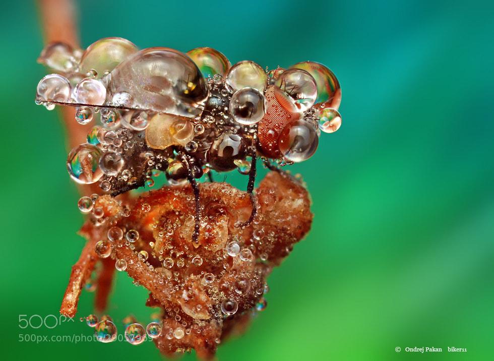 Photograph Jewel by Ondrej Pakan on 500px