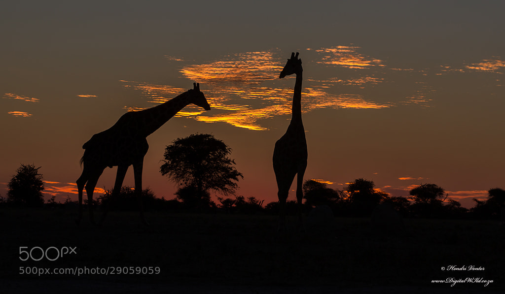 Photograph Standing Tall by Hendri Venter on 500px