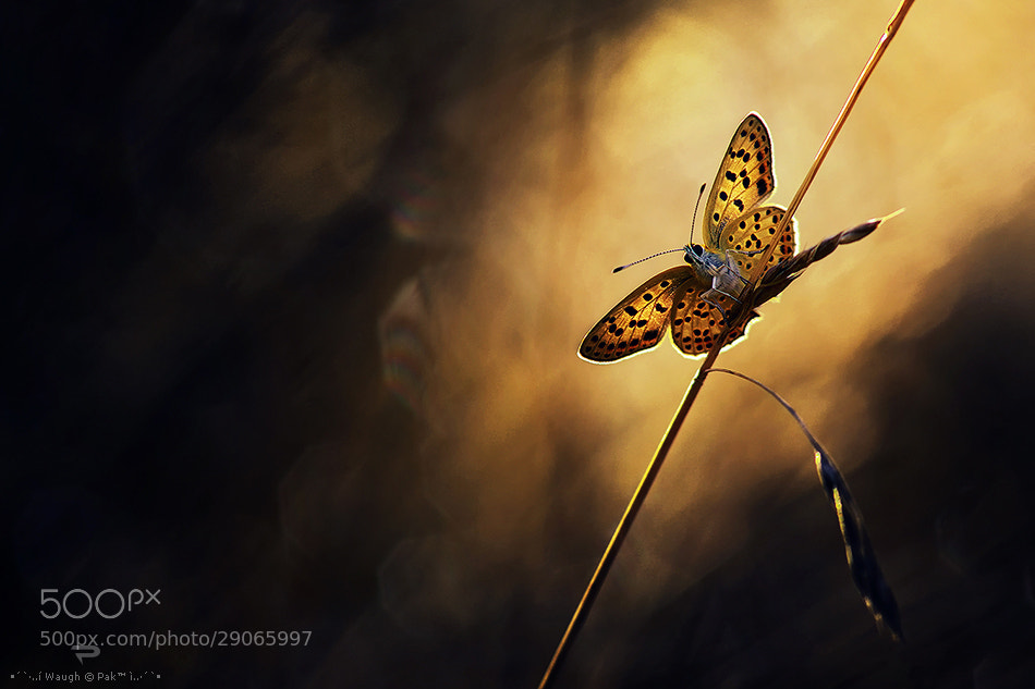 Photograph Light rider by waugh on 500px