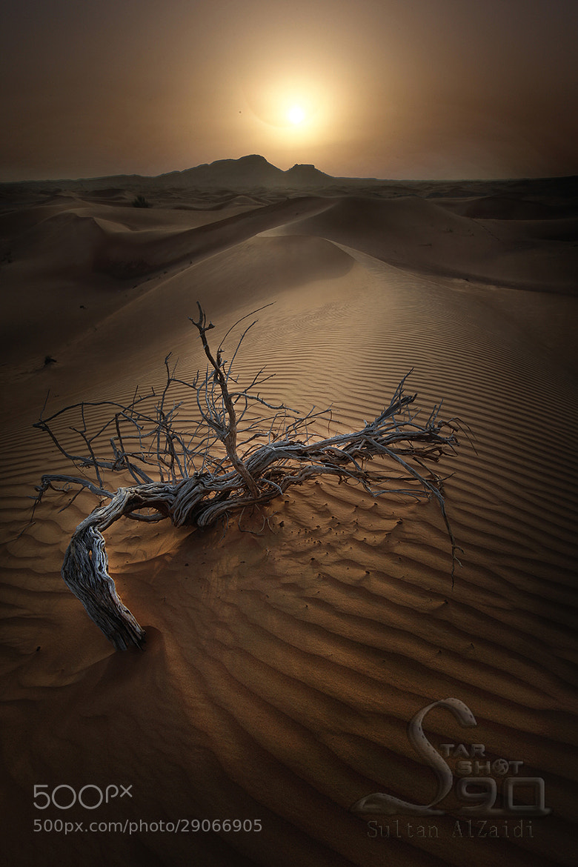 Photograph dryness desert by Sultan ســلطان  Al-zaidi الزيــدي on 500px