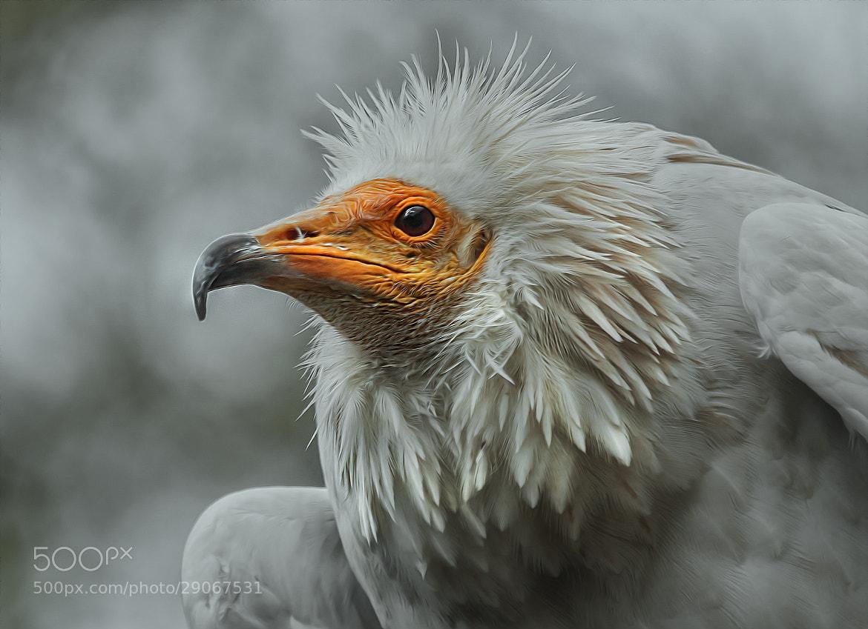 Photograph curious by Detlef Knapp on 500px