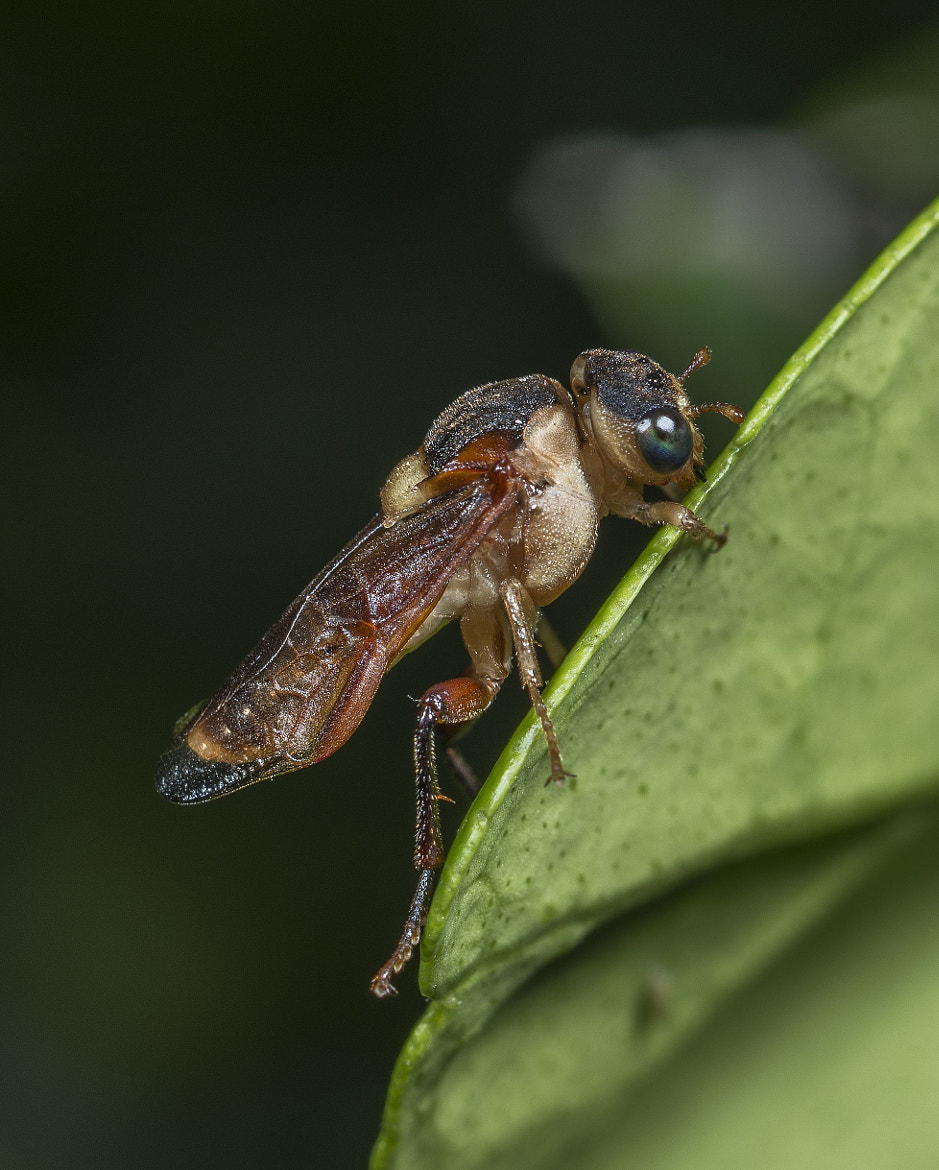 Photograph Bug by Gayle Harrison on 500px