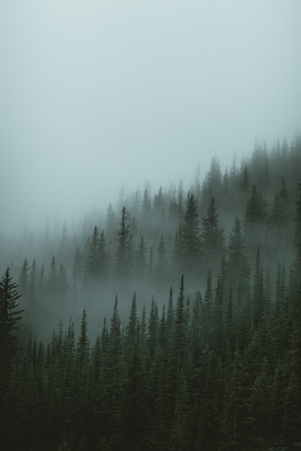 Fog Covered Forest by Aidan Campbell on 500px.com