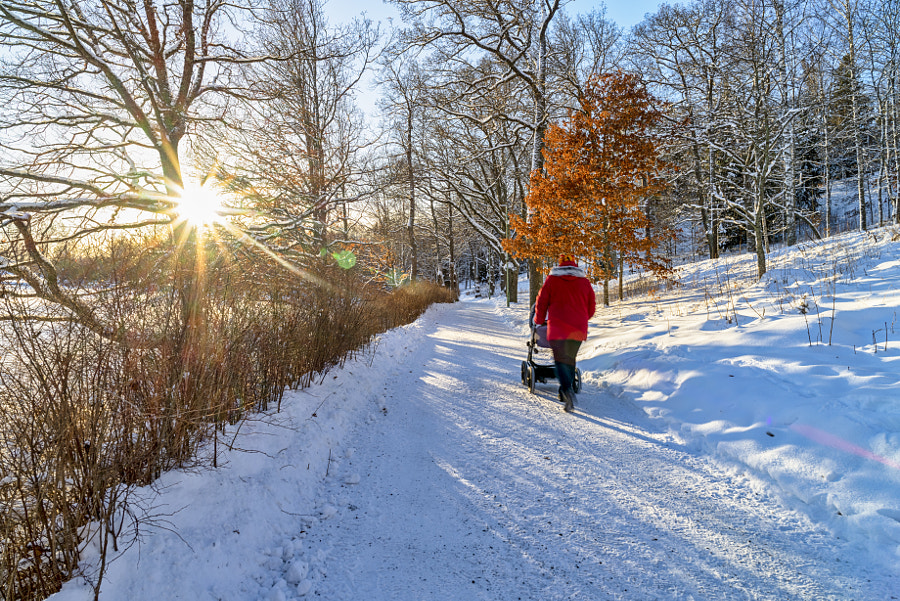 Sunny winter day by Markus Kauppinen on 500px.com