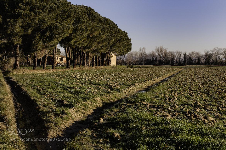 Photograph V by Daniele Sangiorgio on 500px