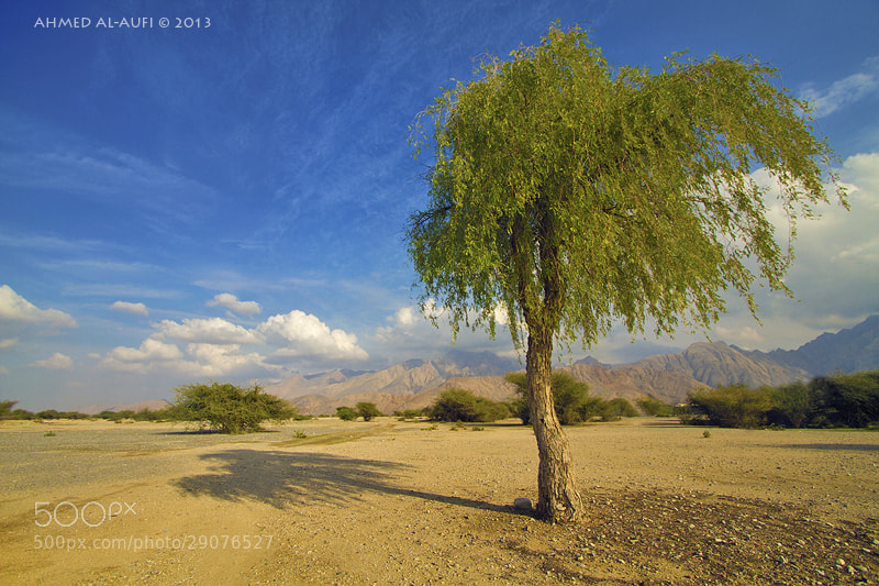 Photograph wadi al-maawel - oman by AHMED AL-AUFI on 500px