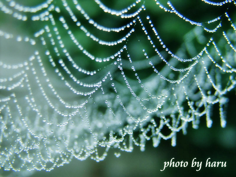 Photograph Spider net and drops by Haru Nature photo on 500px