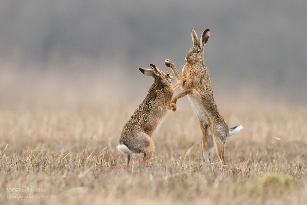 Photograph Fight club by Walter Oberhofer on 500px