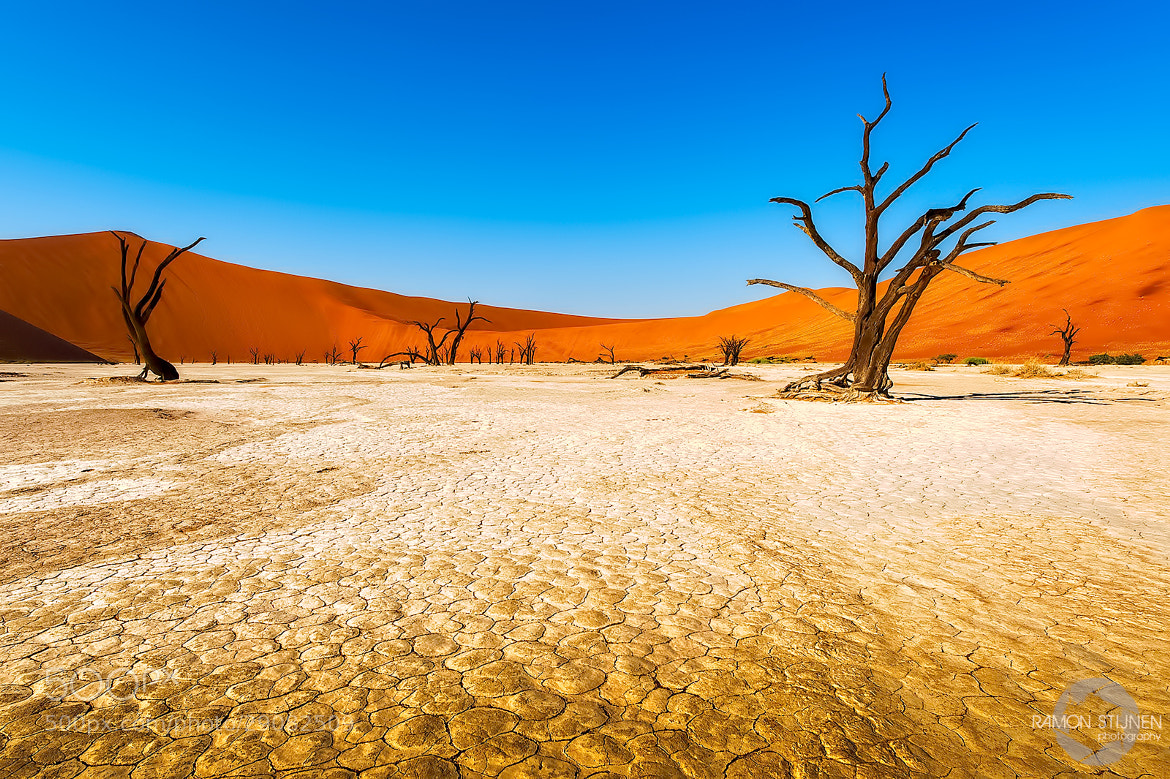 Photograph Deadvlei Namibia by Ramon Stijnen on 500px